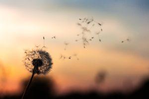 Åndedrætsterapi, åndedræt, træk vejret, ro, forløsning, accept, selvudvikling, transformation