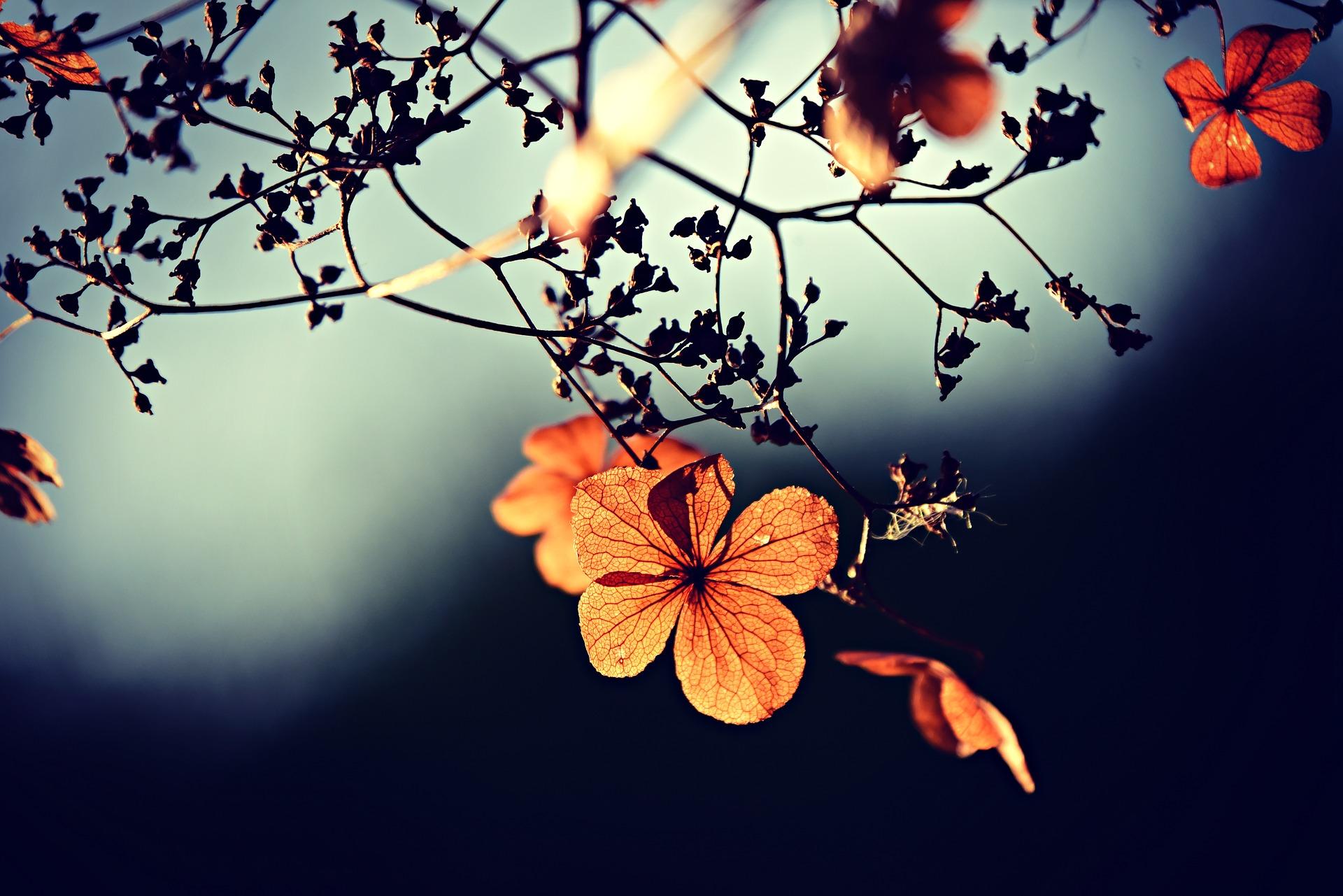 Efterår, efterårsjævndøgn, ritual, årshjulet