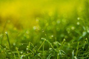 Allergi, græs, pollen, græspollen, lærermester, medicin, holistisk, holisme, spiritualitet
